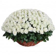 Корзина траурная из белых роз 100 шт. №7520